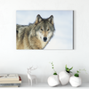 Beautiful wild wolf animal decorative painting 037