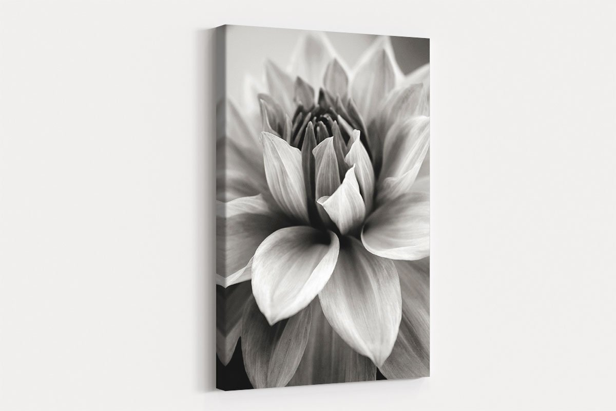Blooming flower black and white decorative painting 018