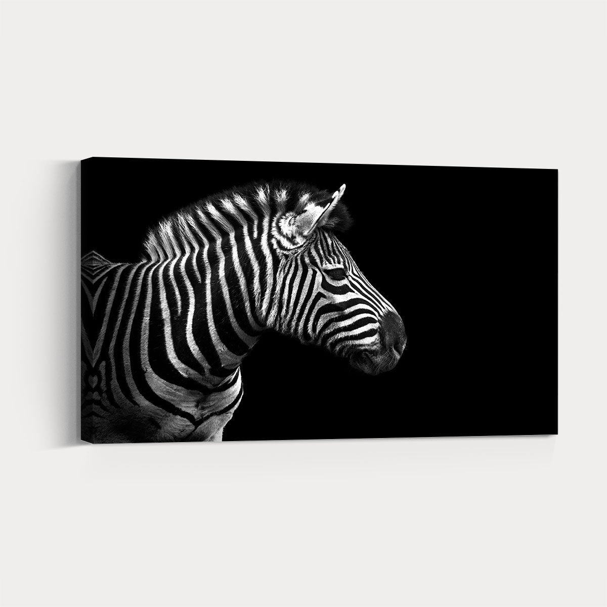 Beautiful zebra animal decorative painting 001