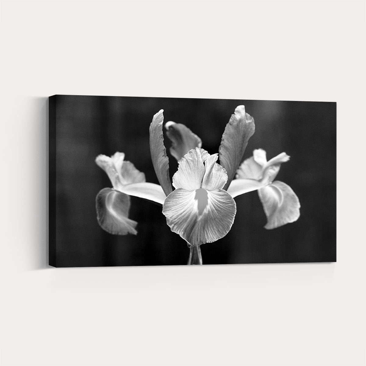 16ca73803 Blooming flowers landscape black and white decorative painting 006 ...