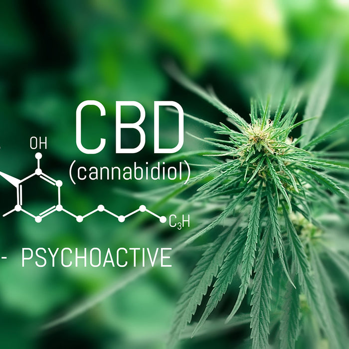 What is CBD - A Beginner's Guide to CBD