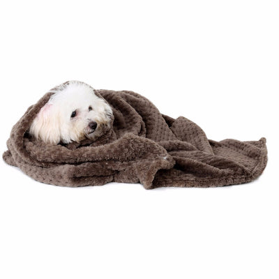 Blanket Dog warm