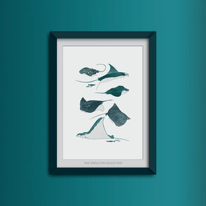Ray Species Art Print