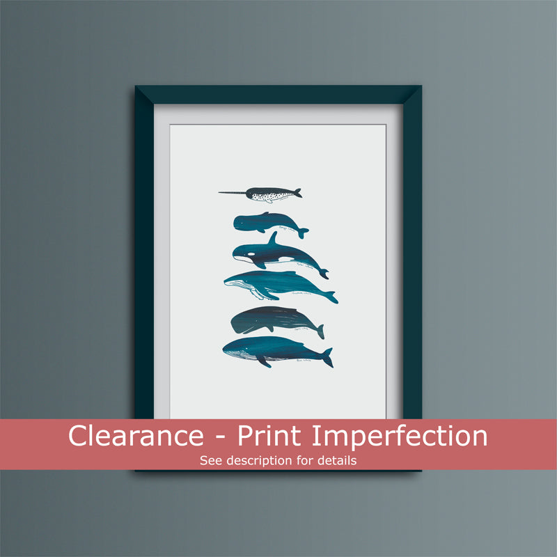 Clearance - Whale Species Art Print
