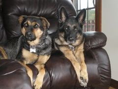 Jada and Lexi MyPupPup.com