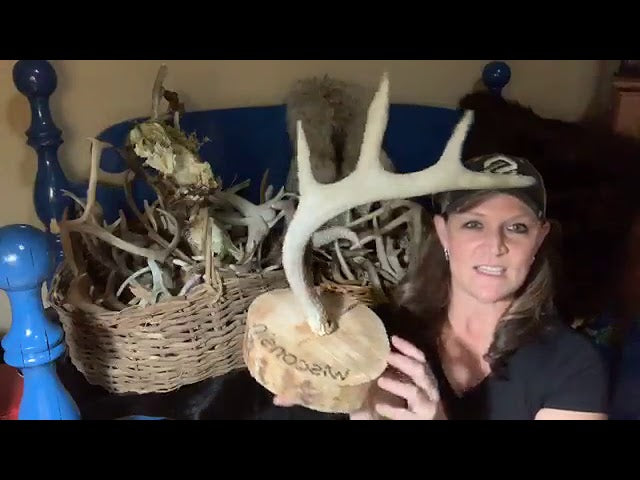 DIY ANTLER JEWELRY/HAT HANGER