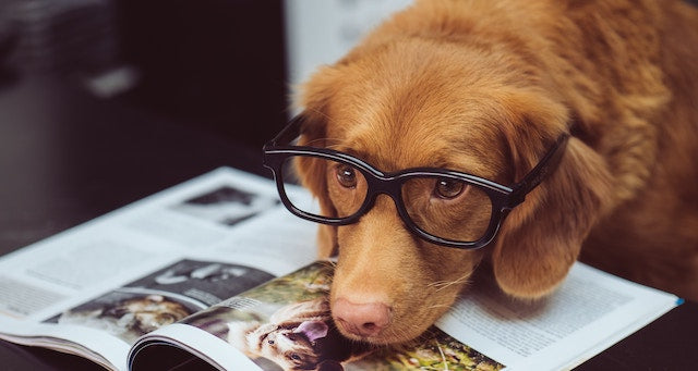 Just a Bunch of Pictures of Dogs and Books
