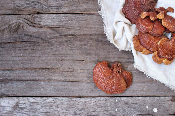 Can You Take Reishi Every Day?