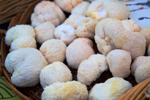 What Are the Benefits of Lion's Mane Mushroom?