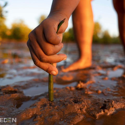 Eden reforestation