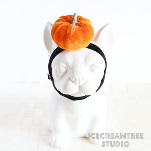 Pumpkin Headband - Pet Photo Prop
