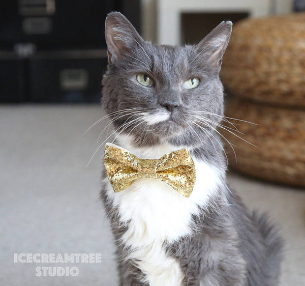 Shiny Purple Bow Tie - Pet Bow Tie