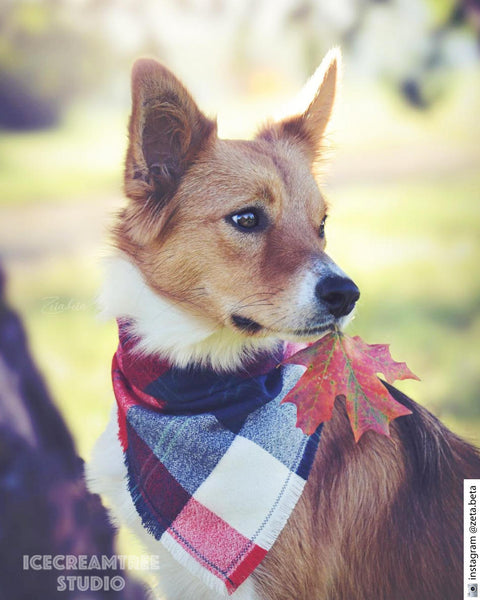 Brick Red Plaid Bandana - Tie on Classic Flannel Pet Bandana Scarf