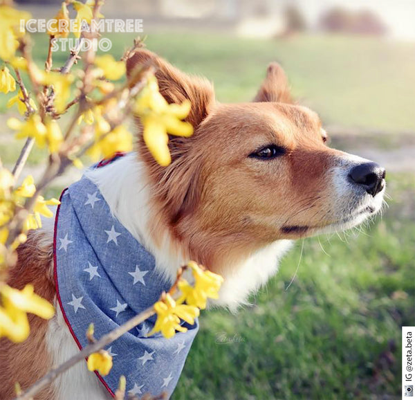 Chambray Blue Star Bandana - Tie on Chambray Classic Pet Bandana Scarf