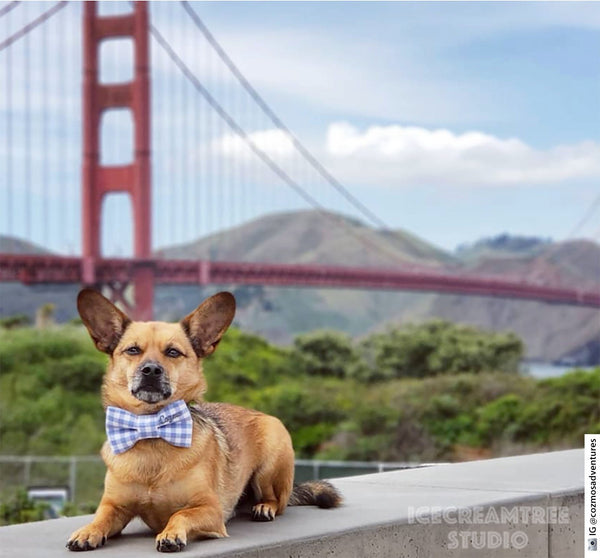 Red Gingham Check Bow Tie - Pet Bow Tie