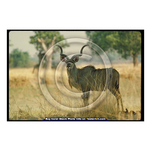 "Image of African Antelopes - Corel Stock Photo CD #77000 <text id=""ICOA""></text>"