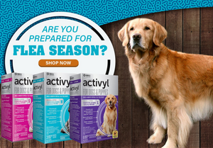 Activyl Flea Treatment Worked for Me