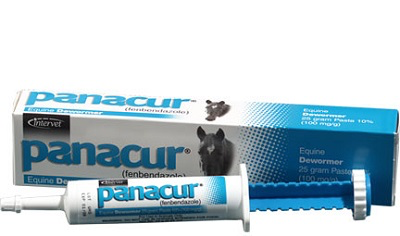 Panacur® Paste 10% Horse Dewormer