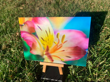 Colorful Flower Photography Print