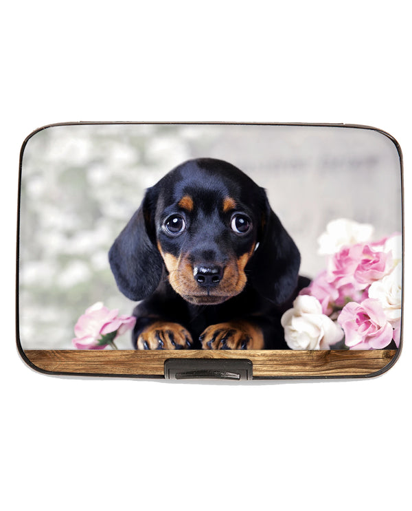 Puppies Dachshund Armored