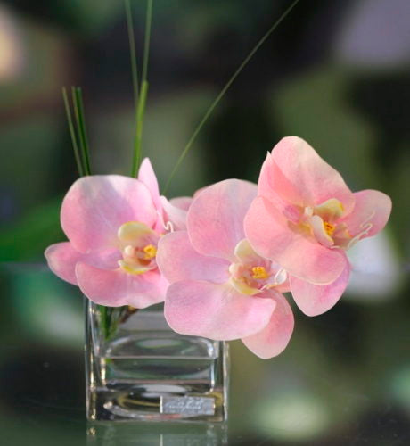 Pink Orchids in Square Vase