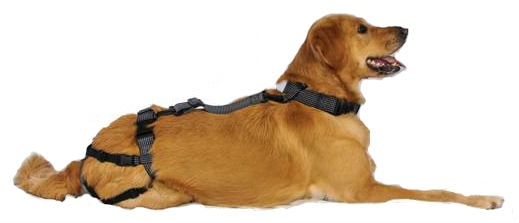 We Are Giving Away Dog Chastity Belts For A Limited Time