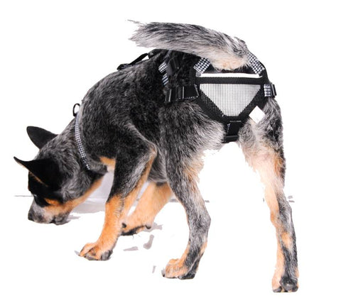 Dog Chastity System Dog Chastity Belt