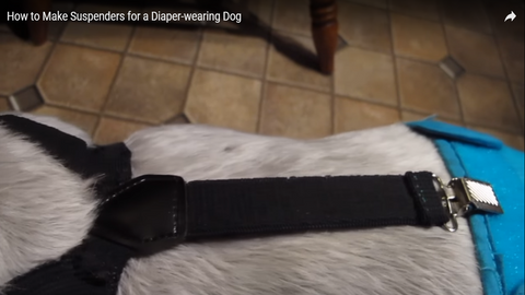 What You Can Learn From Diy Dog Diapers Delay Her Spay