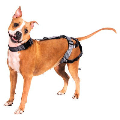 Premium Delay her Spay System (Includes Harness and Inflatable Collar)