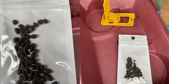 Photos of seeds sent to Virginians unsolicited/VDACS (Source: Virginia Department of Agriculture and Consumer Services)