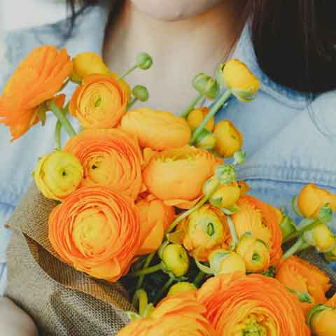 Ranunculus Orange Doubles - 100 Bulbs