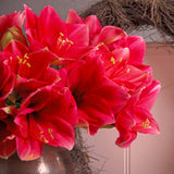 Hippeastrum Red Lion Amaryllis in vase - GoGardenNow