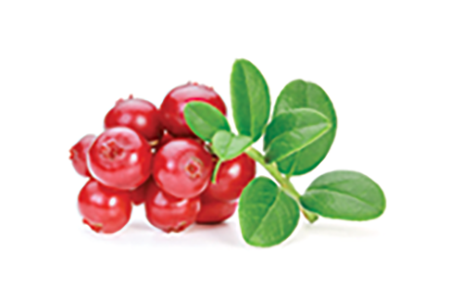 Ligonberry Seed Oil