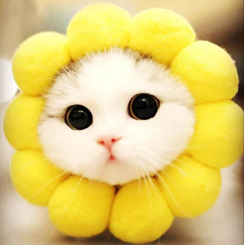 Flower pet costume - party-paw