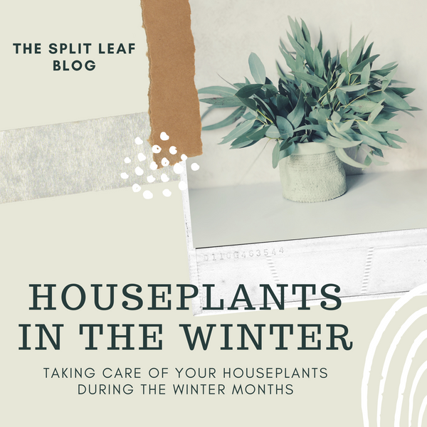 Houseplants In The Winter : Blog Post