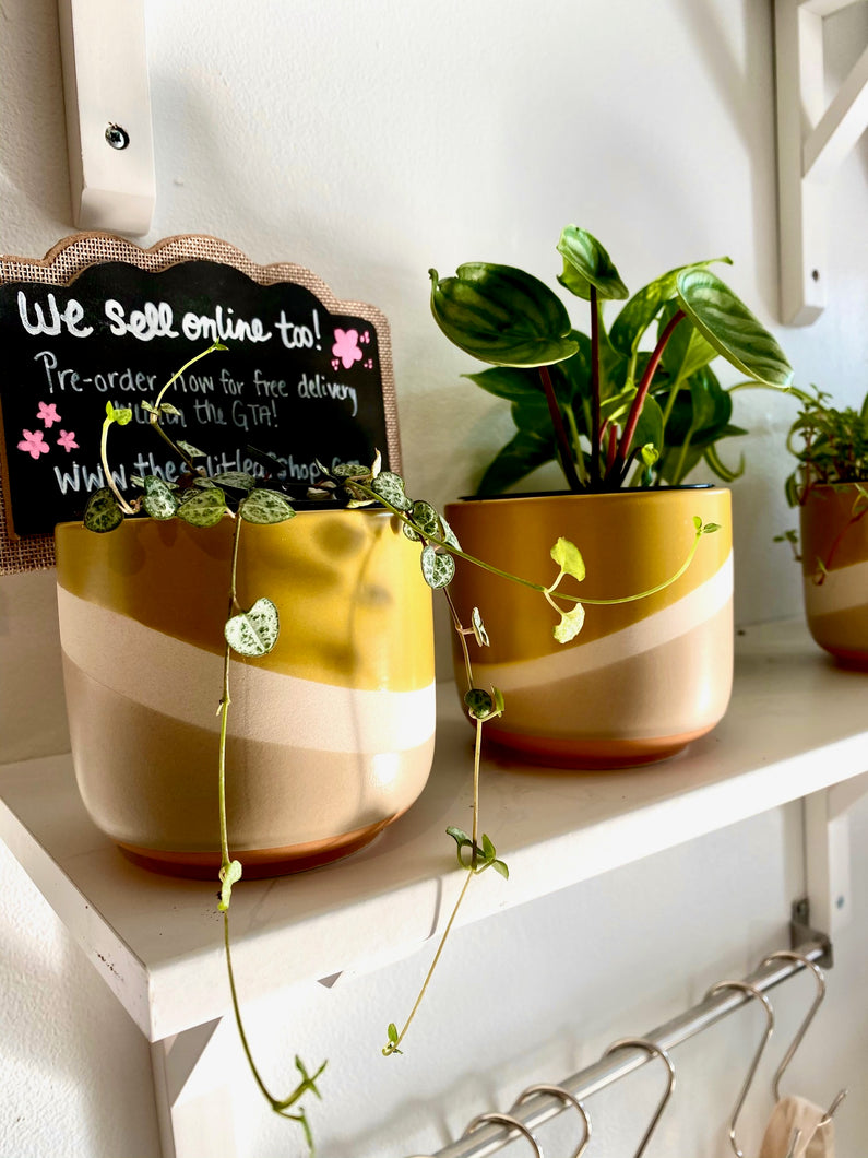 Plant Subscription - Small Plant & Pot