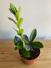 "Load image into Gallery viewer, Zamioculcas ""ZZ plant"""