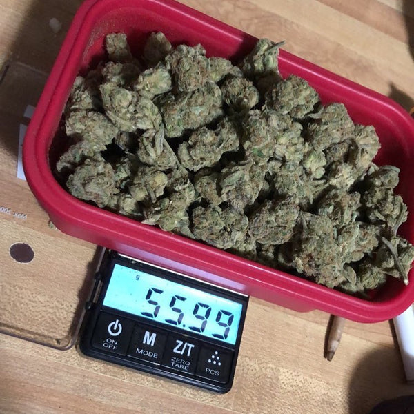 The Truweigh Crimson digital scale is in use on a wood table. The silicone bowl is filled to the brim with cannabis nugs, and the screen reads 55.99 grams.