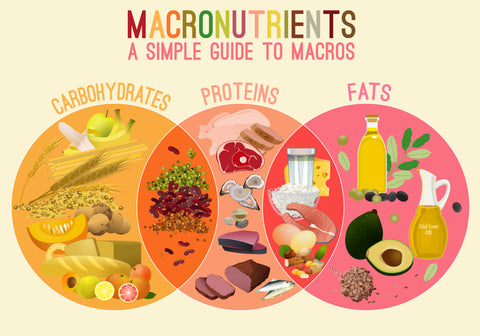 A Simple Guide to Macronutrients Infographic with three overlapping circles. Carbohydrates has grains and fruits, and overlaps with Proteins which has beans and legumes in the overlap. The Protein circle shows meats and seafood, and overlaps with Fats where the overlap shows dairy. The Fats circle has oils, avocado and nuts.