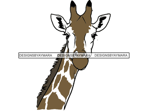 Giraffe Animal Africa Long Neck Safari Animals Close-up Bizarre Staring Tall High .EPS .PNG Vector Clipart Not for Cutting