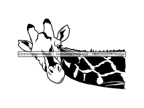 Giraffe Animal Africa Long Neck Safari Animals Close-up Bizarre Staring Tall High .SVG .EPS .PNG Vector Clipart Circuit Cricut  Cut Cutting