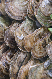 Lucky Lime Oysters - New Canaan