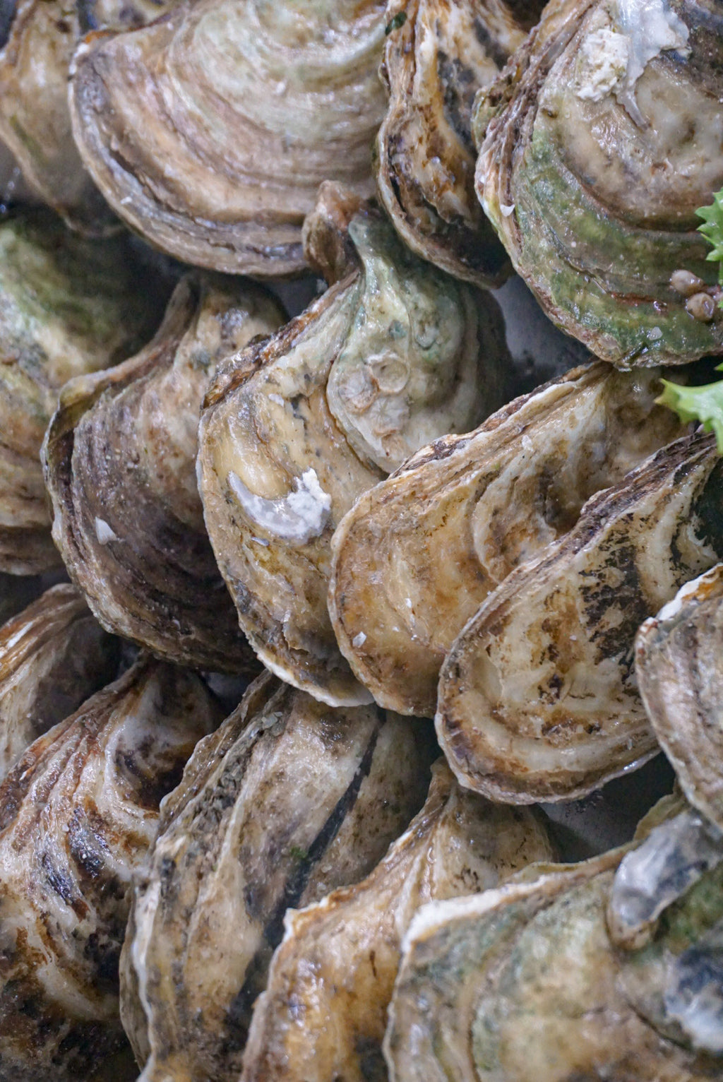 Lucky Lime Oysters - Darien