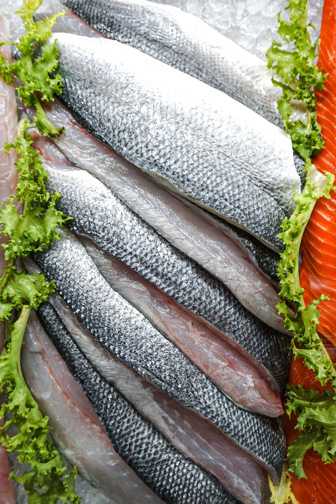 Stack of Bronzini Fillets