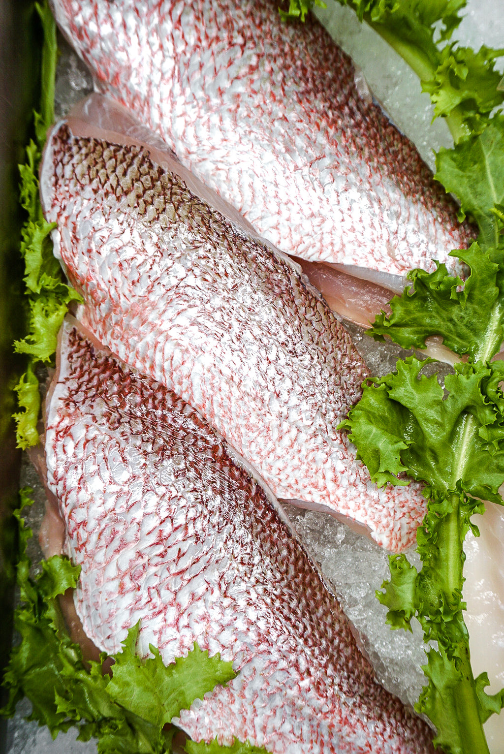 Snapper Fillet - New Canaan