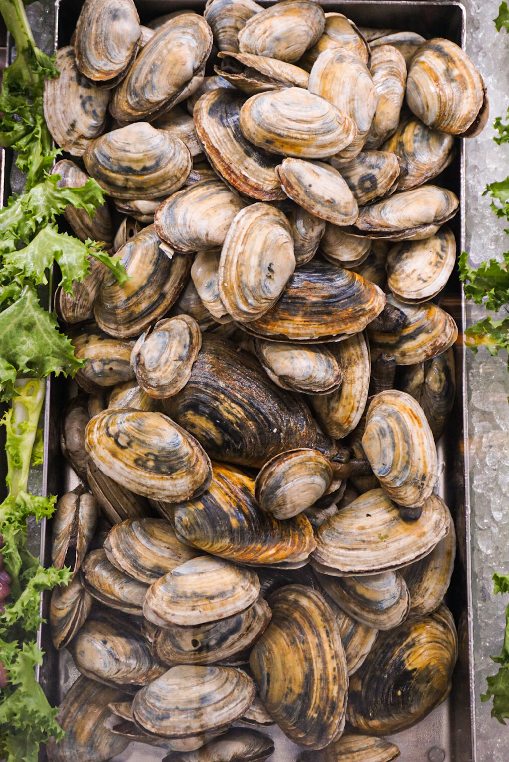 Steamers - New Canaan