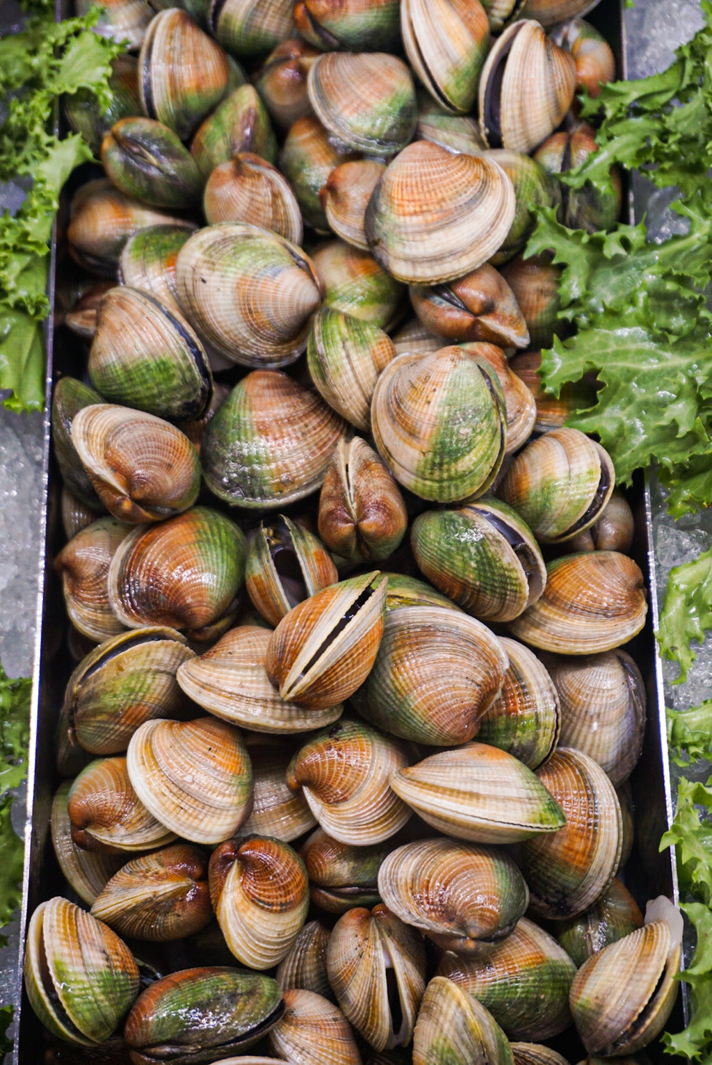 New Zealand Cockles - Park Slope