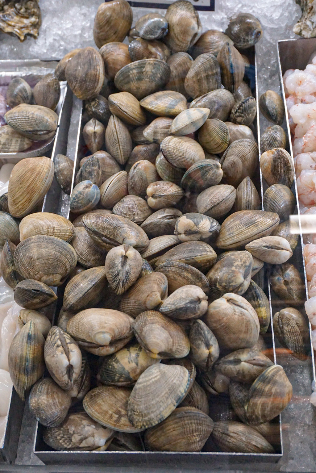 Manila Clams - New Canaan