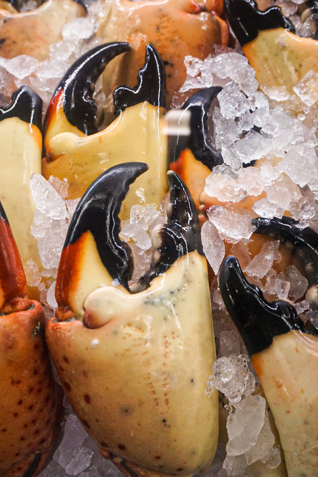 Stone Crab Claws (Next-Day) - New Canaan