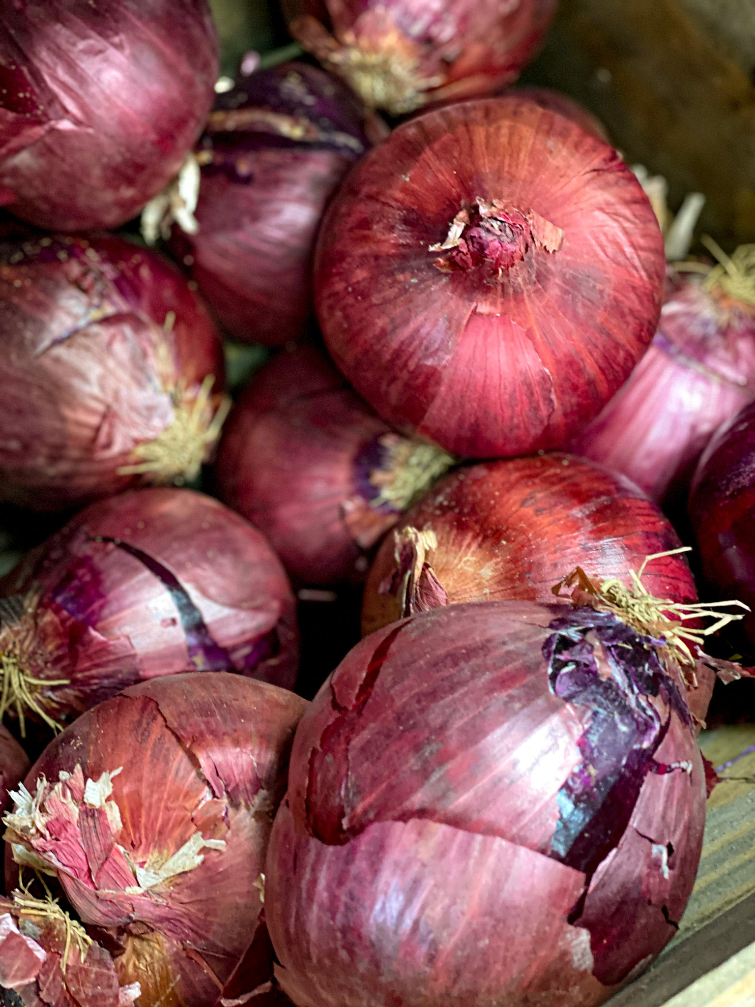 Red Onion - Delivery